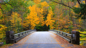 Bridge in Massachusetts, Autumn, Bridge, Forest, indian summer, leaves, Massachusetts, Trees, way