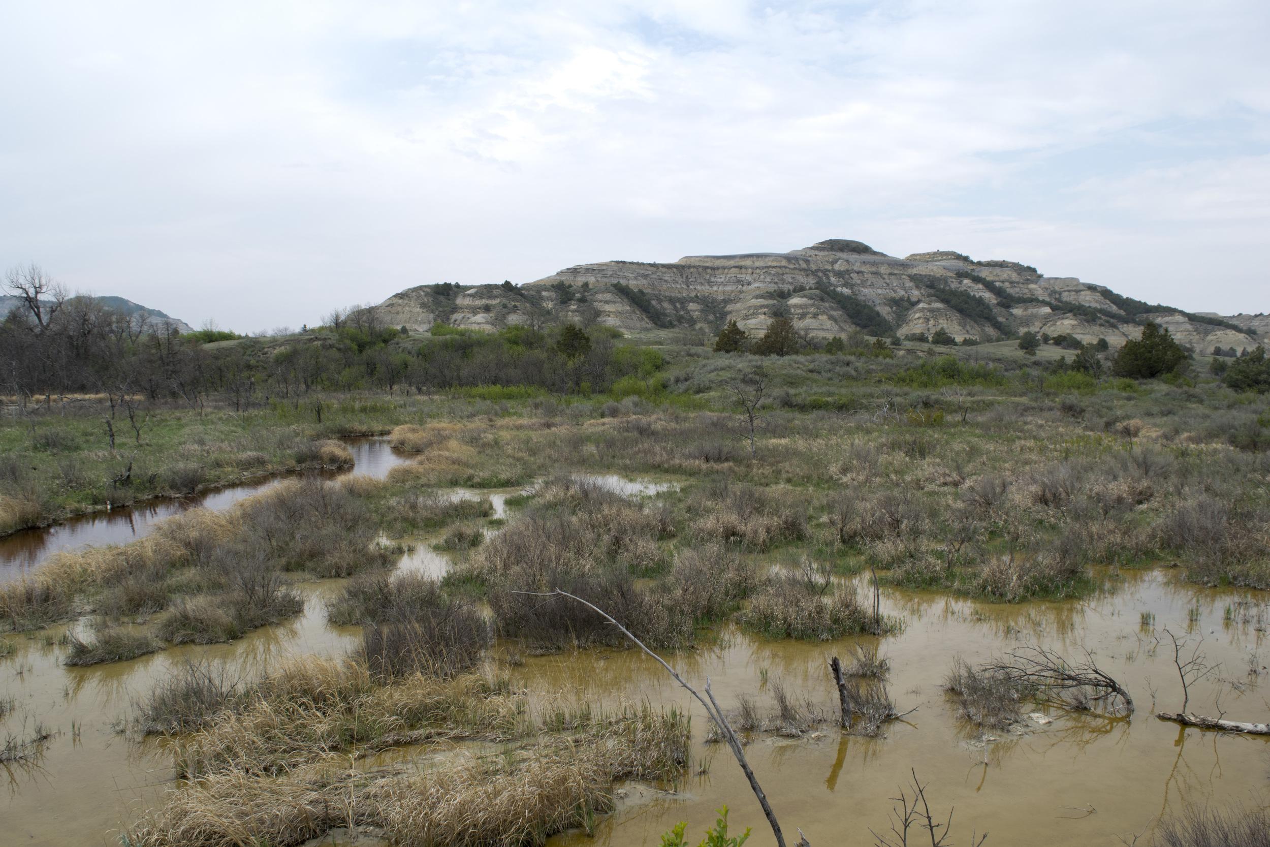 Little Missouri River Wetlands