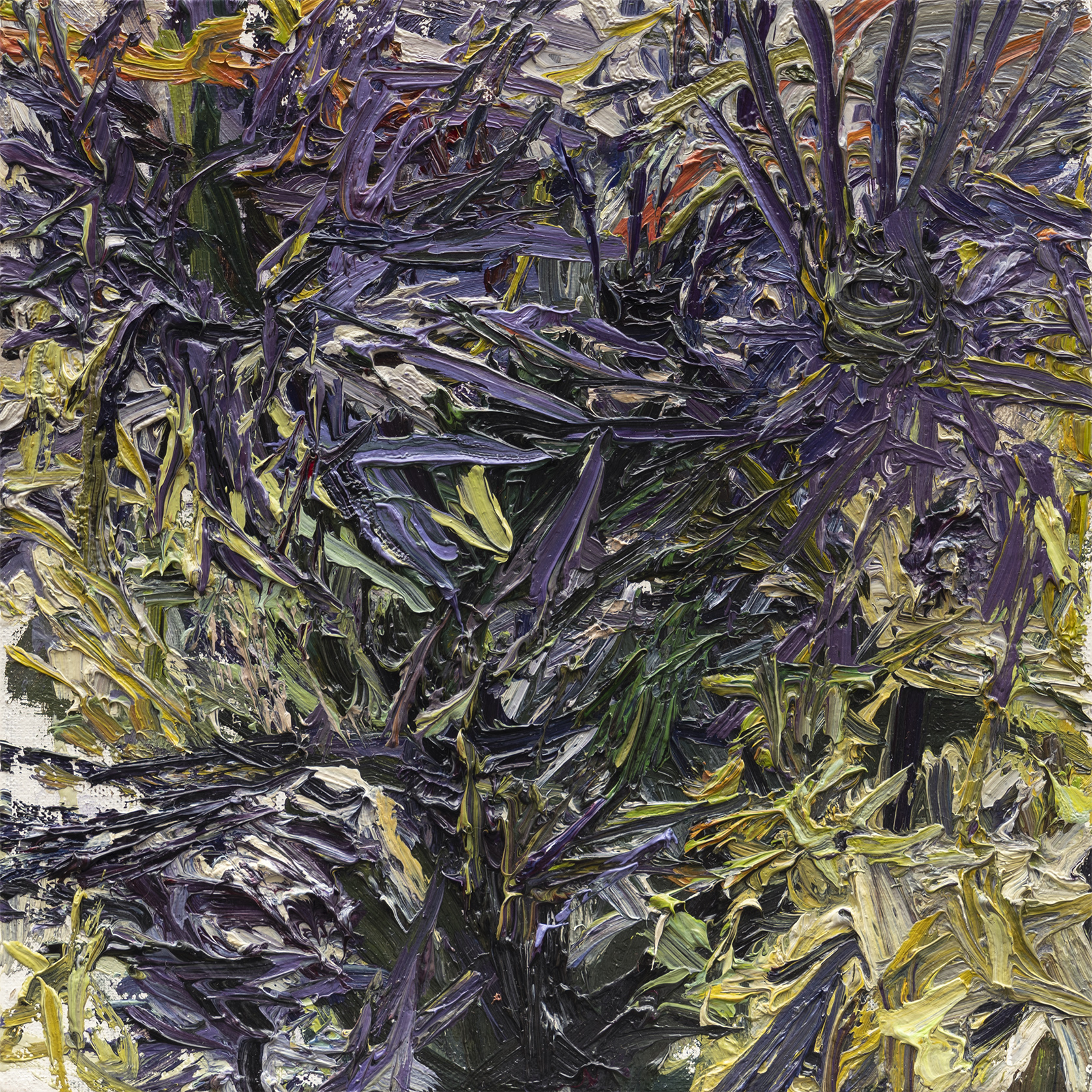 Thistles No.3   10in x 10in, oil on linen, 2018