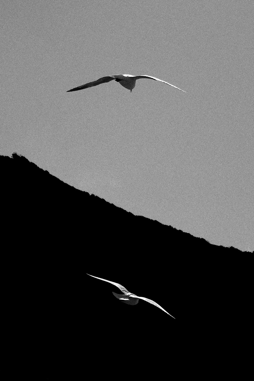 Two birds_Makara beach.jpg