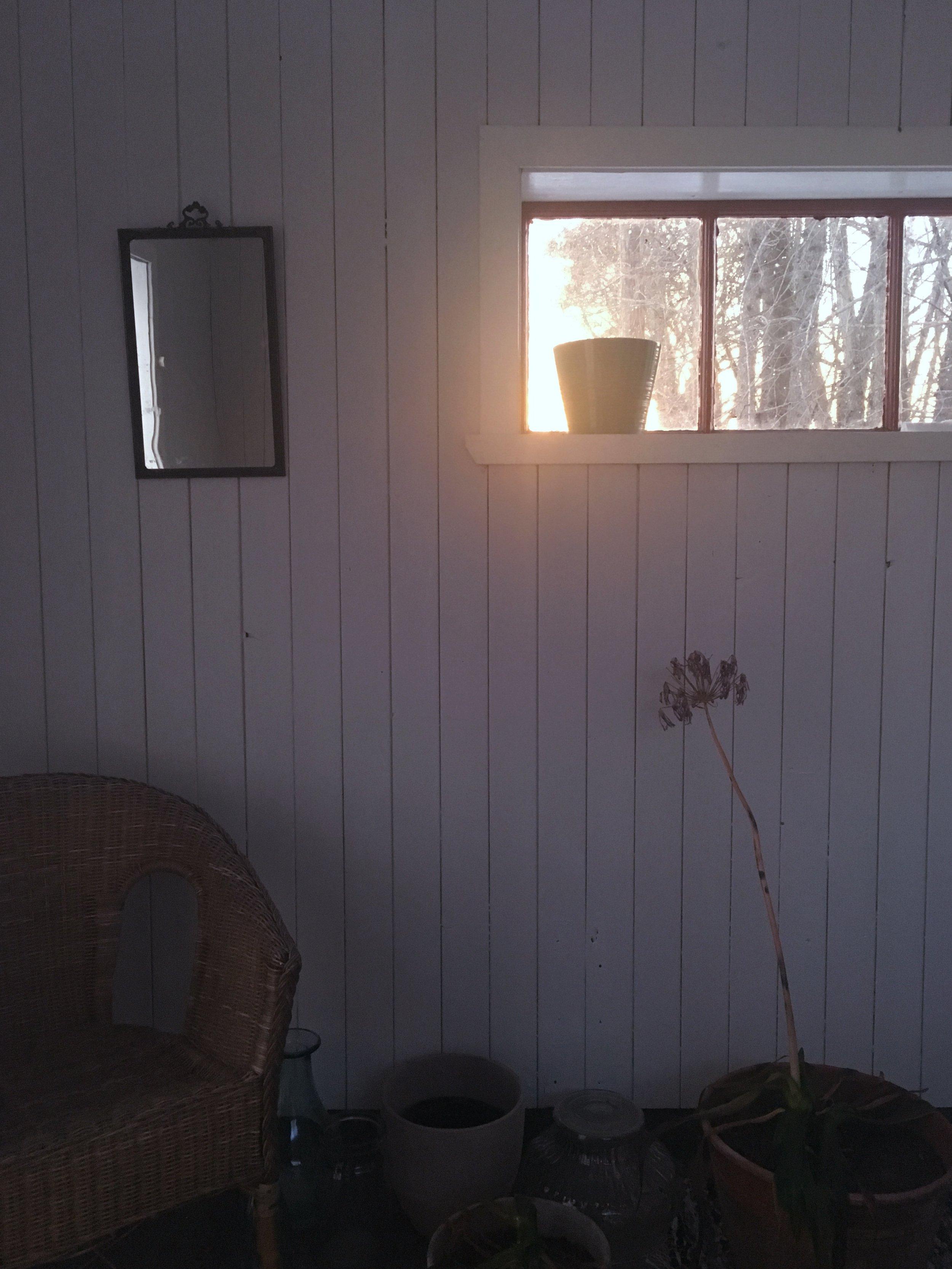 Har övervintrat min Afrikanska lilja men tror nog att den frusit lite väl mkt denna vinter..