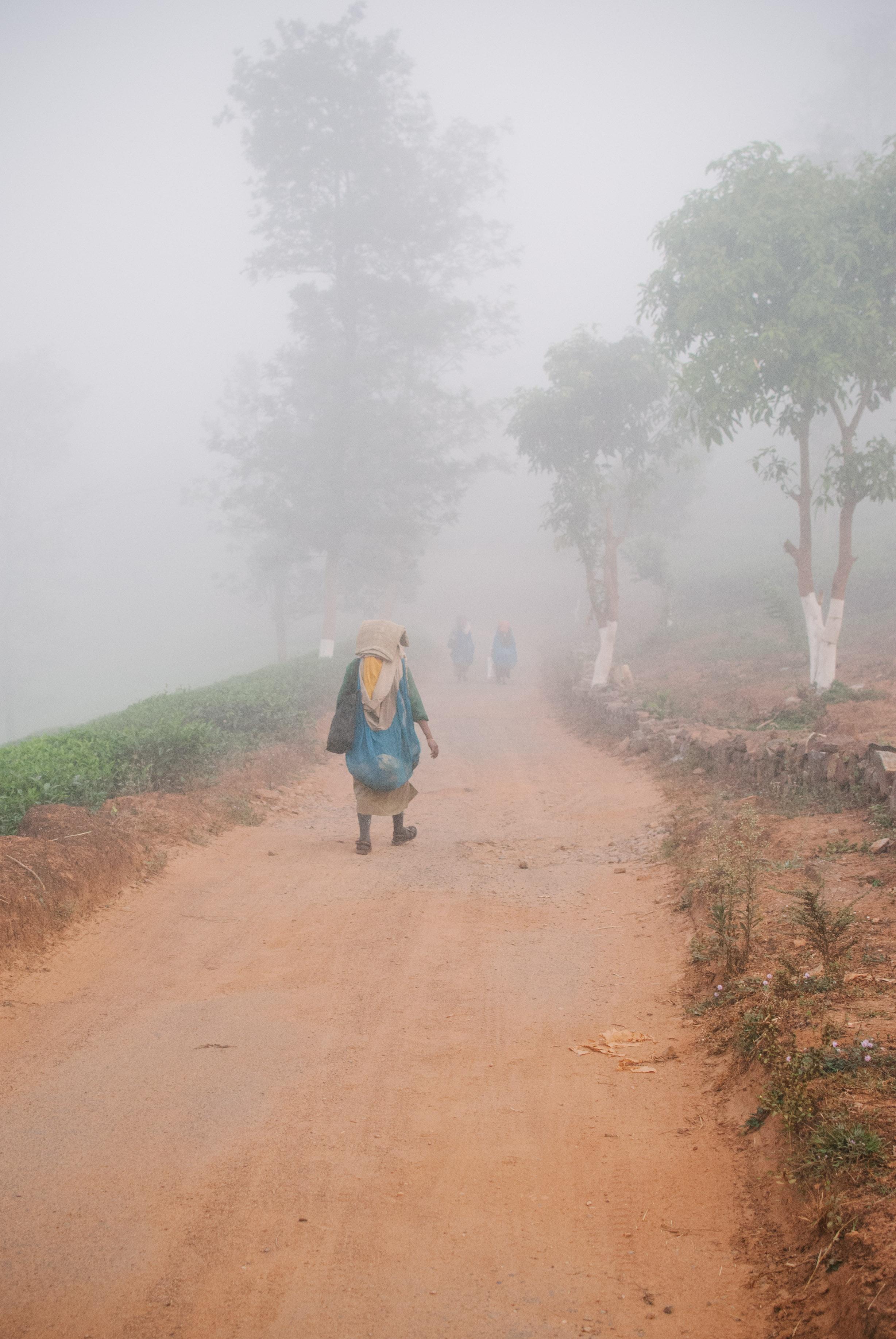 India W-0600.jpg