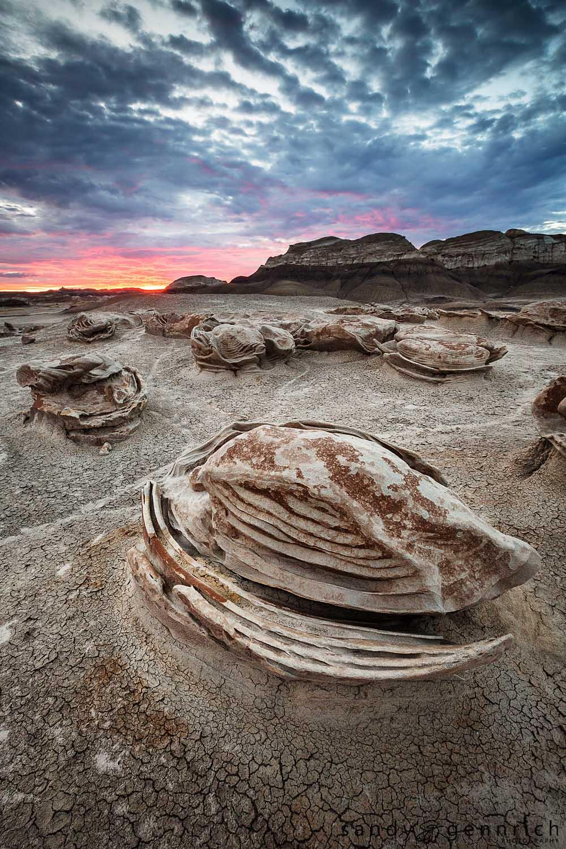 Sea Turtle - Bisti Badlands - Farmington, NM