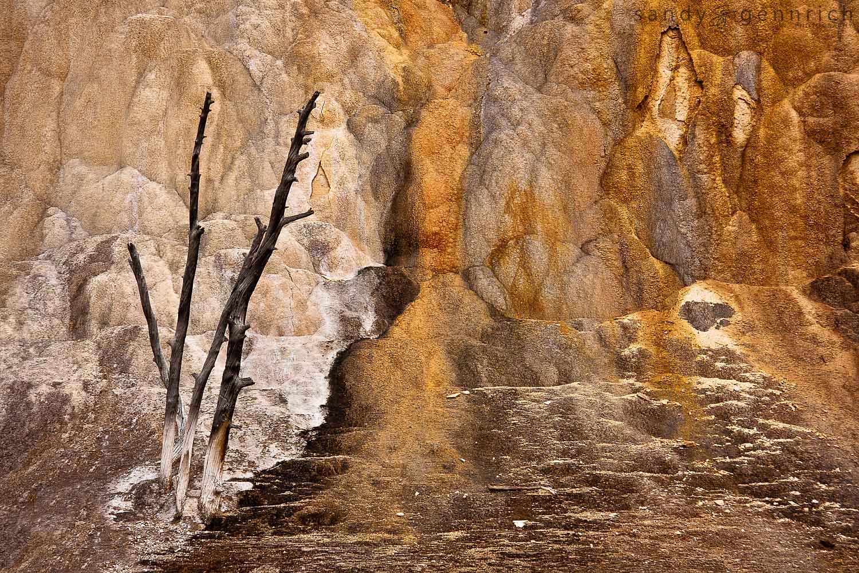 Stark - Yellowstone National Park - WY