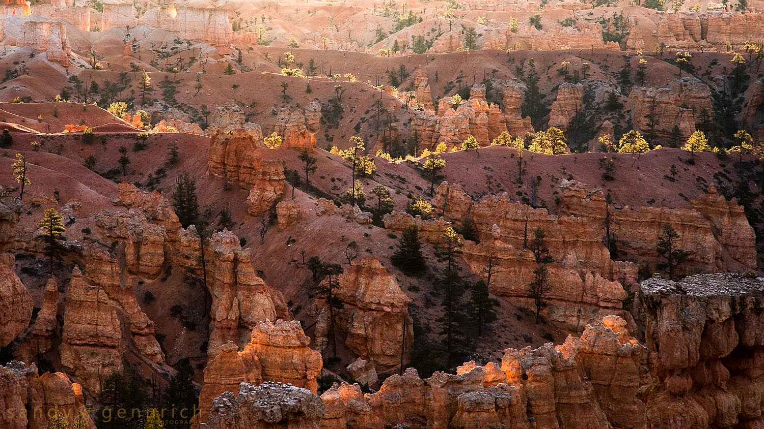 Sun Kissed-UT-Bryce Canyon