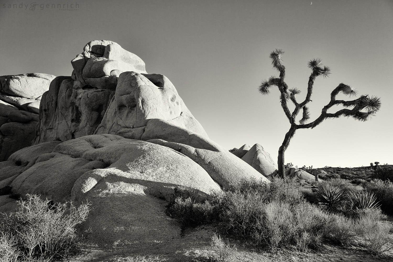 Joshua Tree and Rocks-Joshua Tree National Park-Twentynine Palms