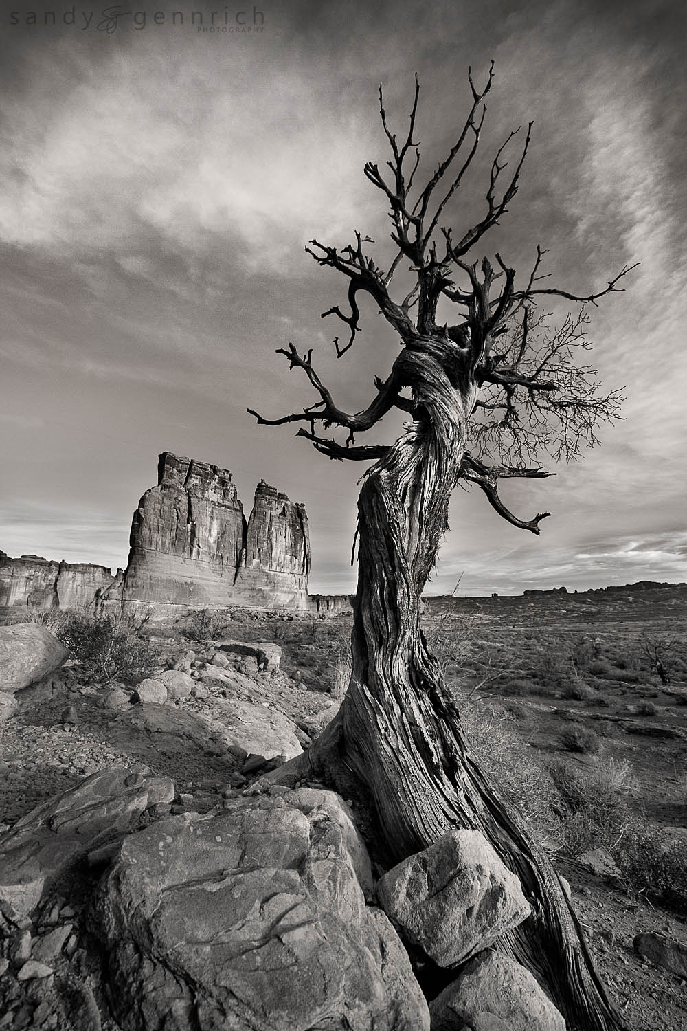 Persistence - Arches National Park - Moab UT