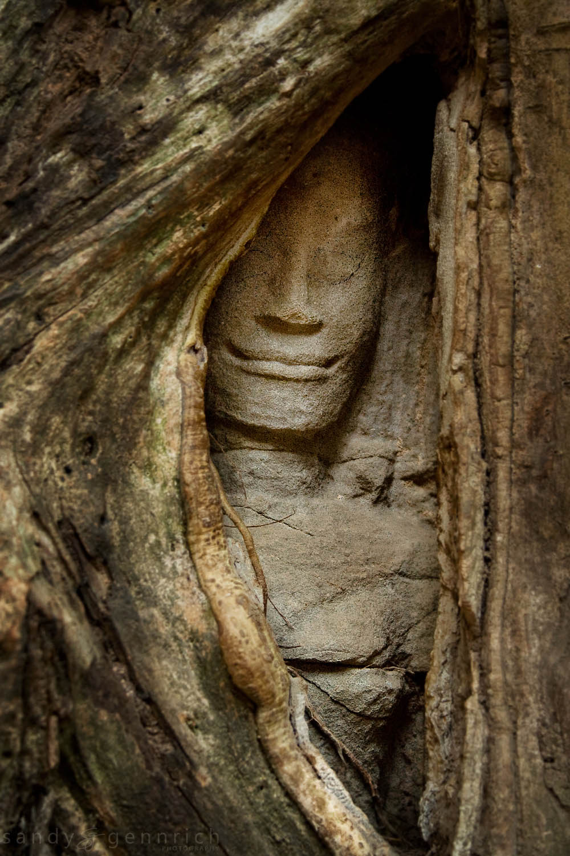 Peeking Through - Ta Prom Temple - Angkor Wat - Cambodia