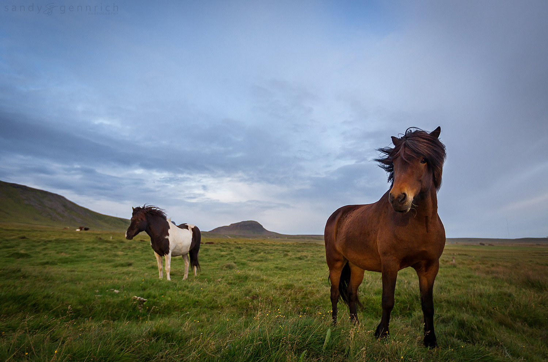 Freedom - Olafsvik - Iceland
