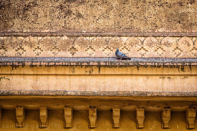 Pigeon and Wall-Fatehpur Sikri