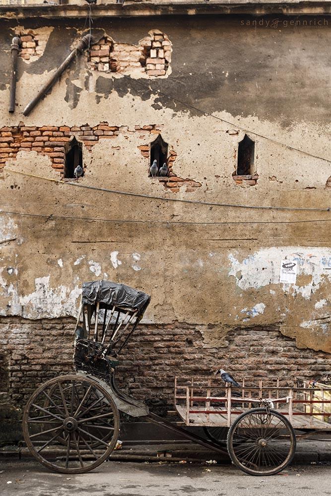 Hooded Crow, Pigeons, and Rickshaw-Kolkata-India