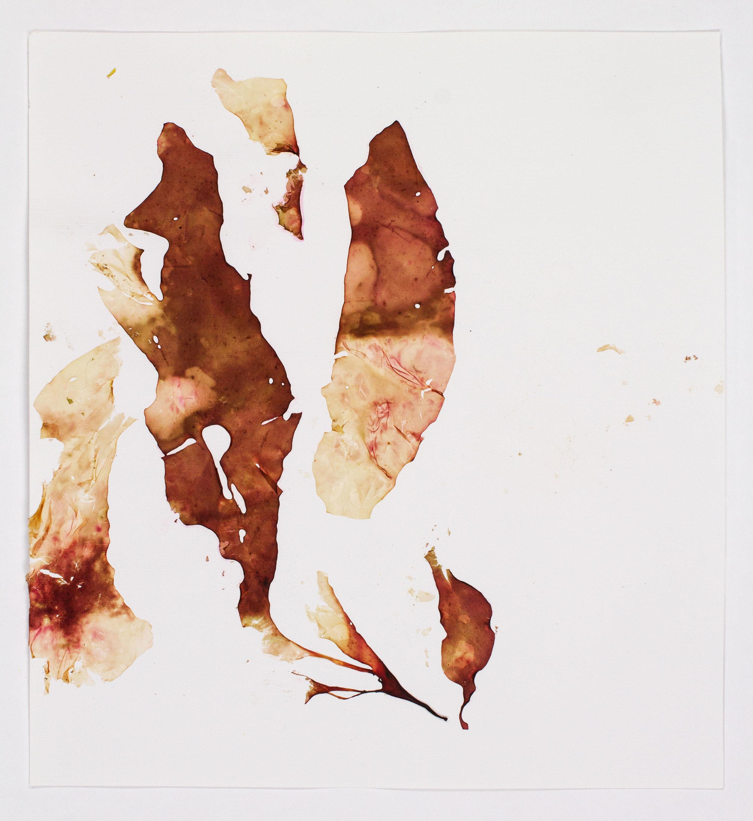 SeaweedCollage-BrownTyeDye.jpg