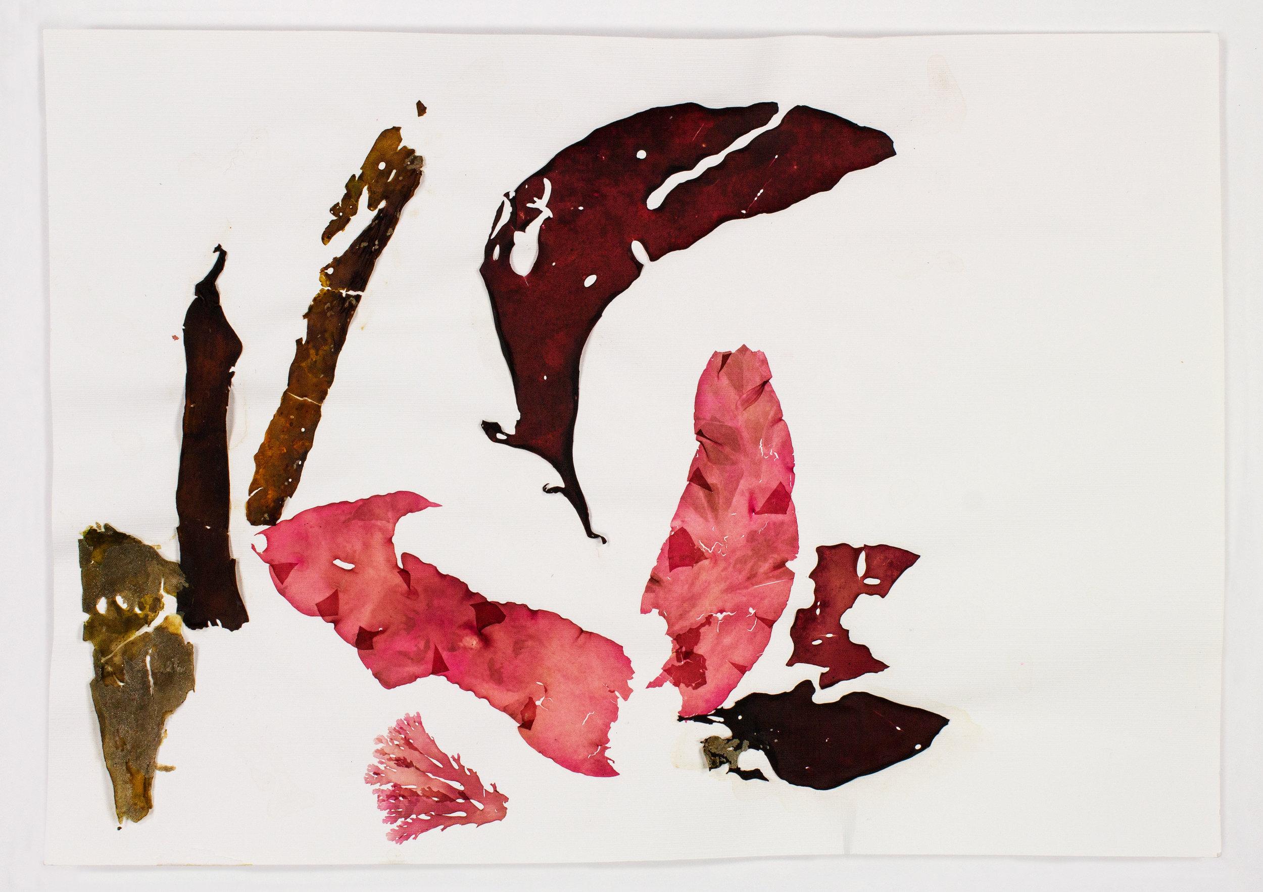 SeaweedCollage-pink.jpg
