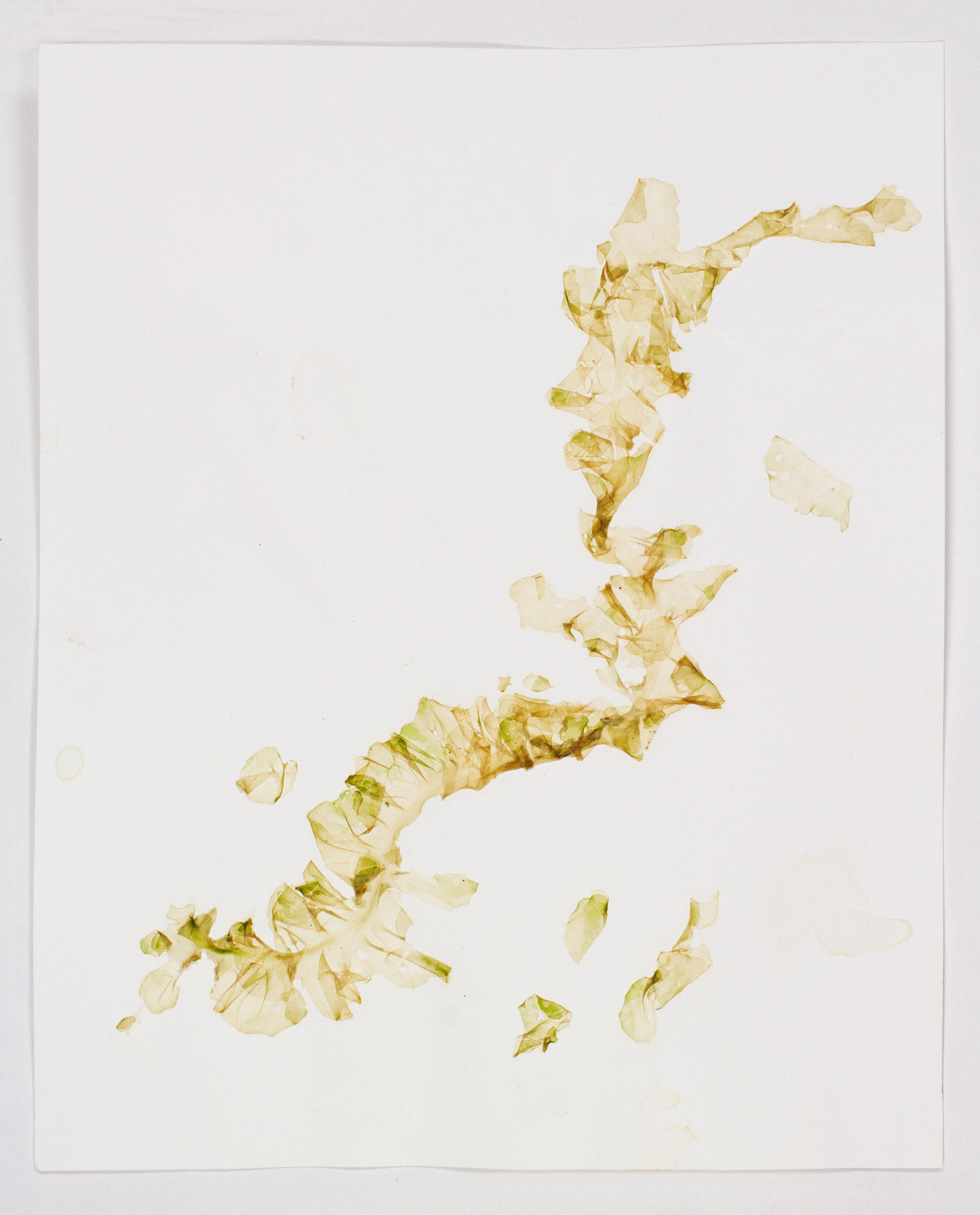 SeaweedCollage-Placenta.jpg