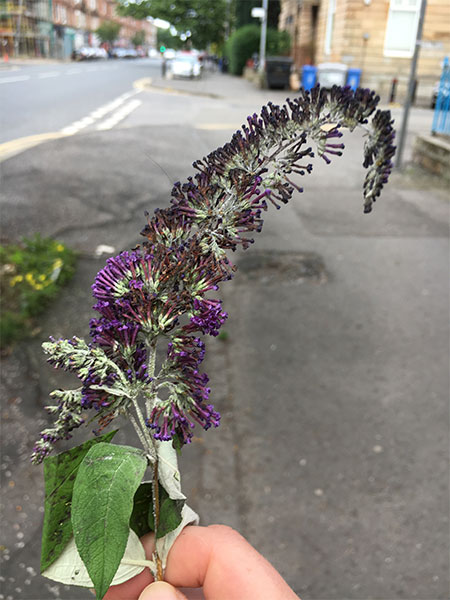Paisley Road West lilac