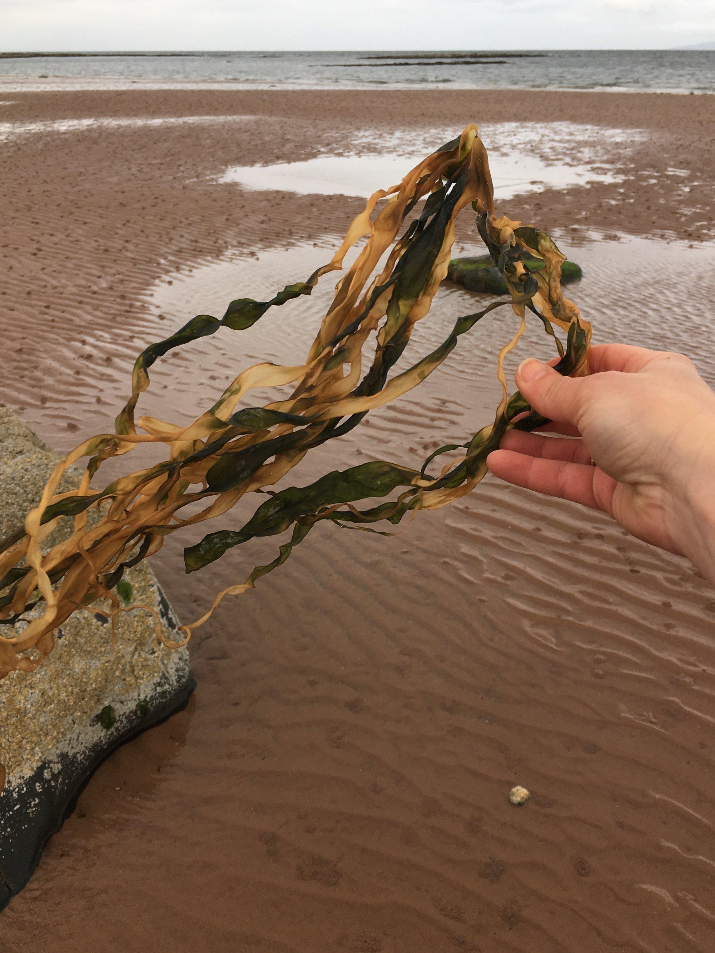 Returning some seaweed that I borrowed