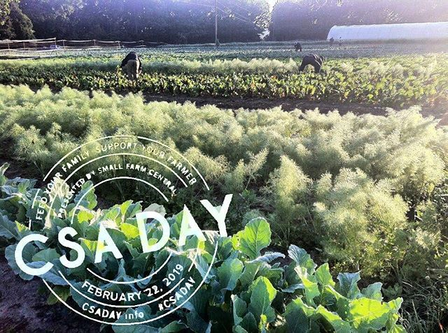 Happy national CSA day . No better time to sign up online  www.signalmountainfarm.com #since1998  #signalmountainfarmcsa  #chattanoogacsa  #csafarm