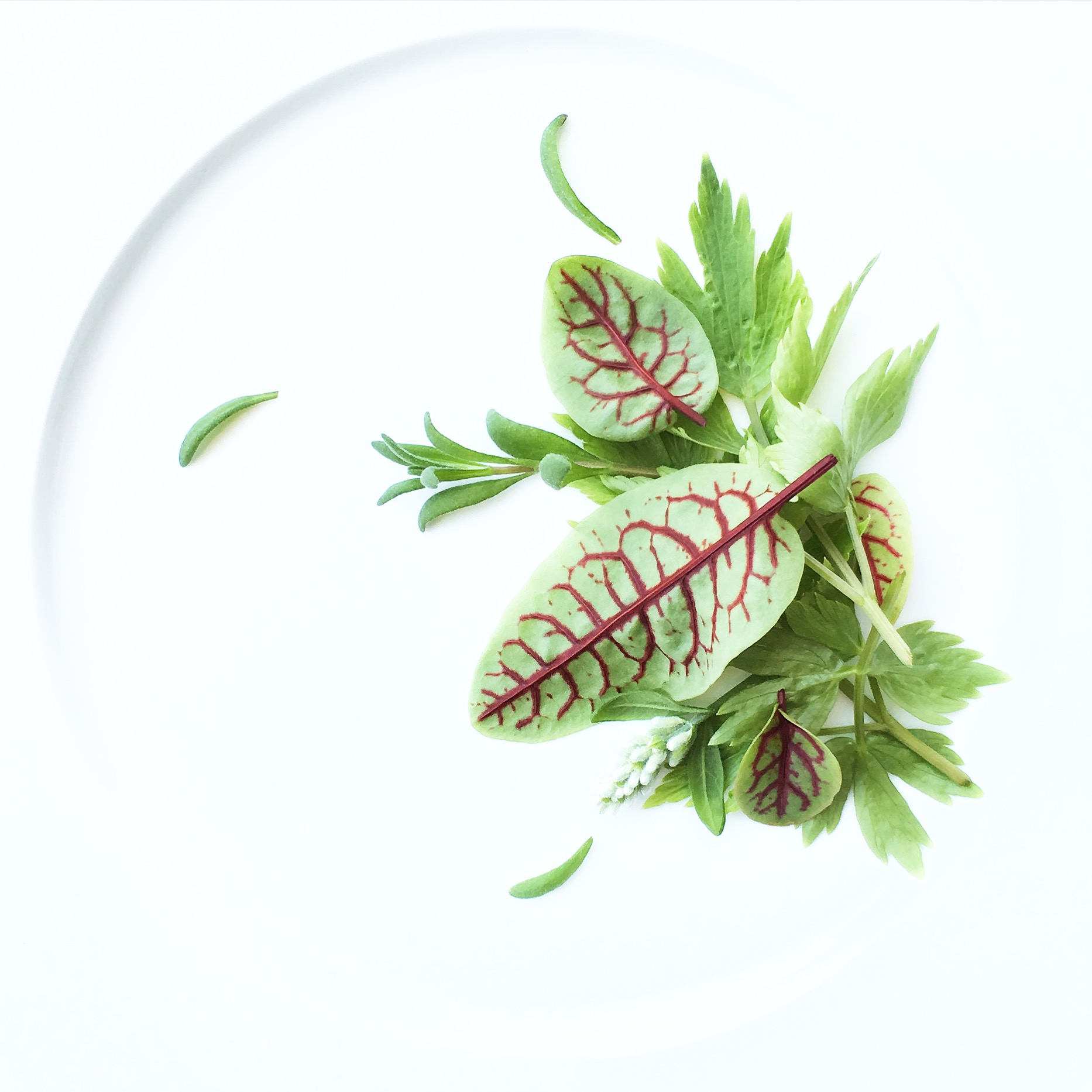 Red Veined Sorrel. Lovage. Lavender.