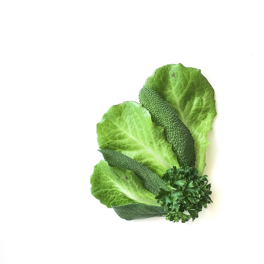 Summer Crisp Lettuce. sage. Wega Parsley.