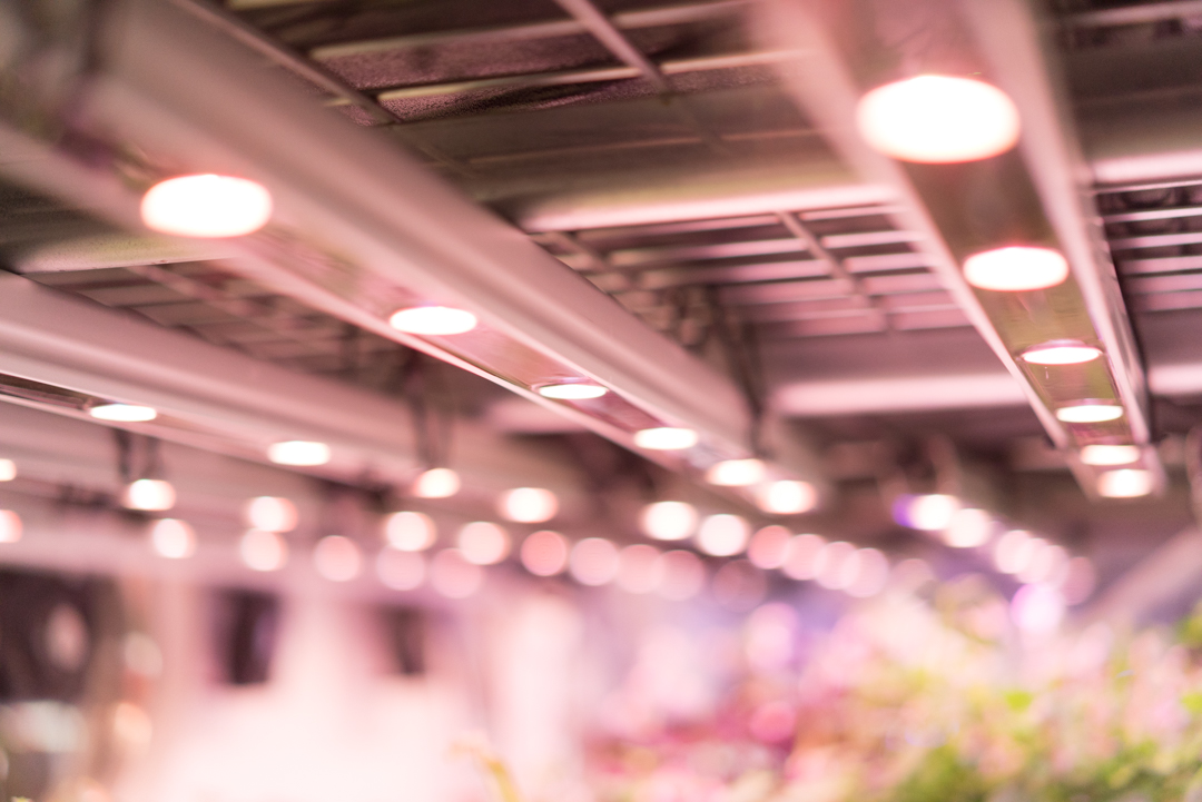 Lighting is a crucial input for plants. It is important to have a solid understanding of what lighting to use for your ideal indoor system.