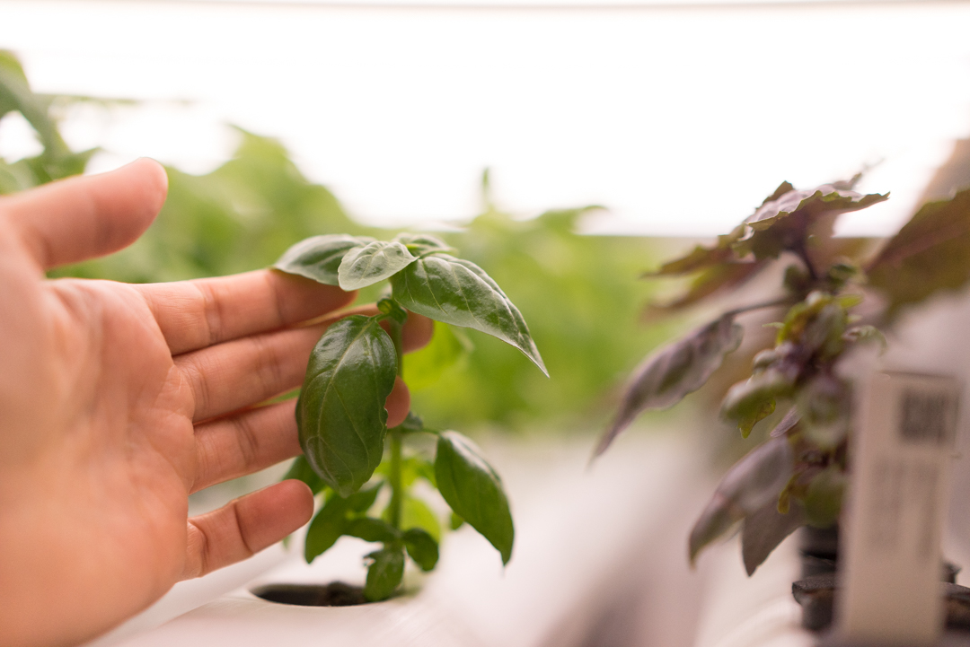 Plants are living, breathing, complex life forms. We can help you know your plants like you know the back of your hand.