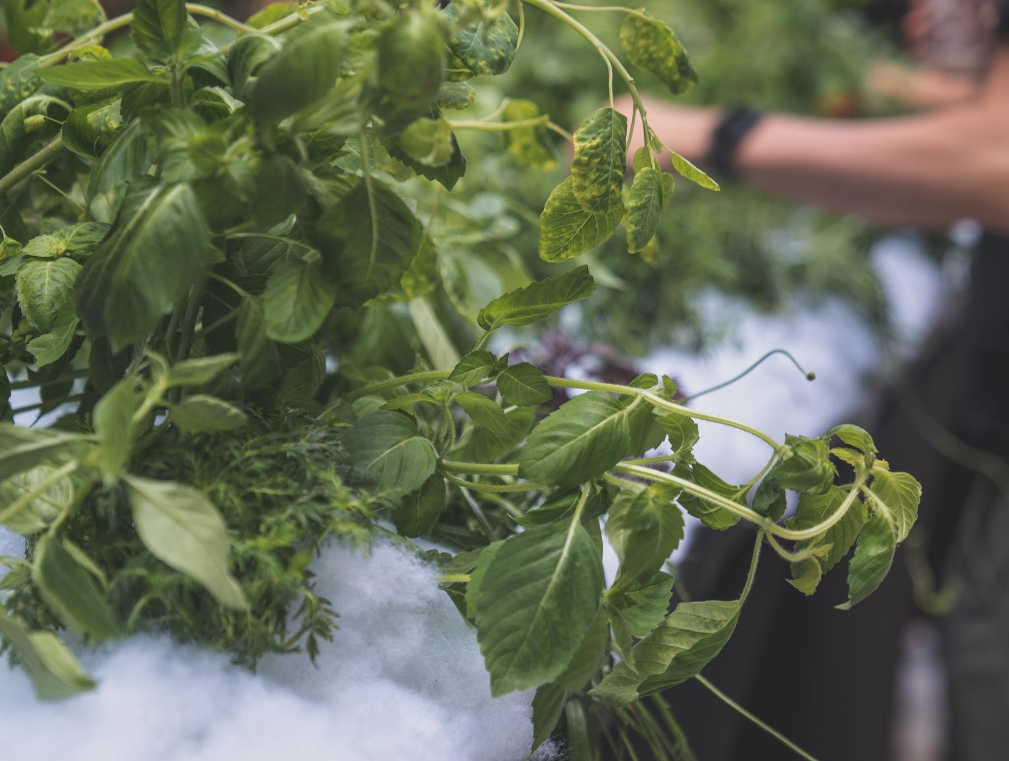 Our live plants give off delicious aromas as they are cut and served.