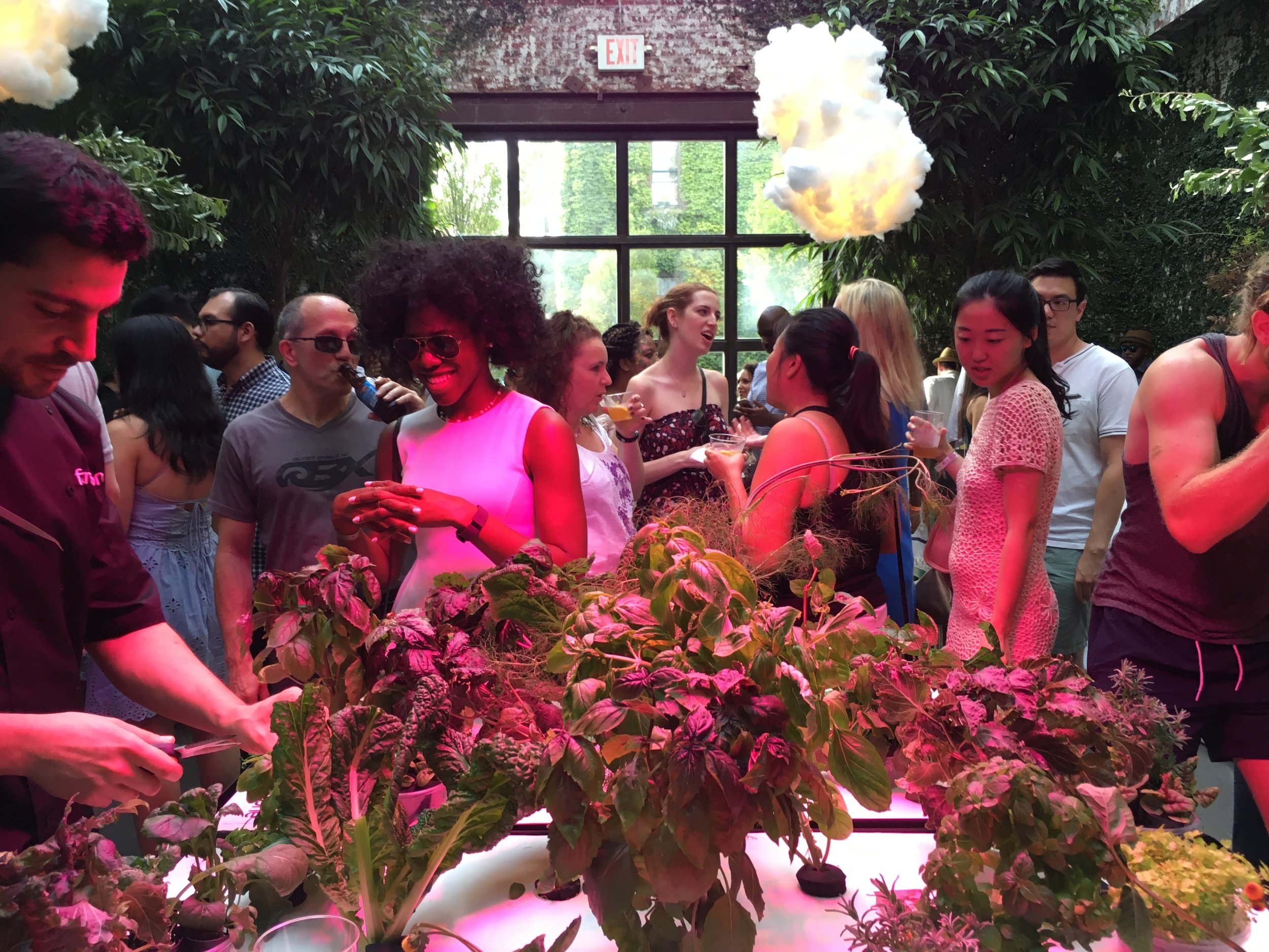 Guests receive plant descriptions and flavor notes from farm staff, tasting different unusual herbs like amethyst basil, wood sorrel and more.