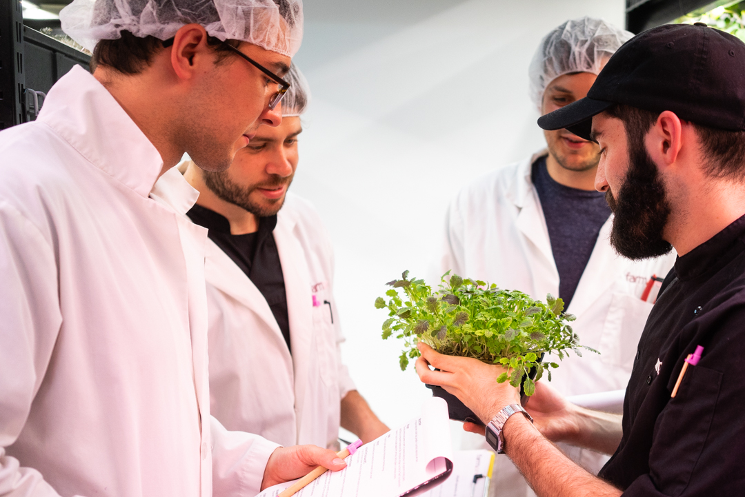Learn how to germinate, transplant and work from cuttings in hydroponic systems.