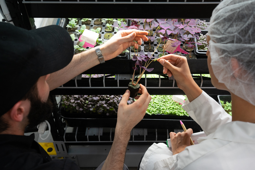 Hydroponics can be more efficient, faster and more sustainable, as well as being easy and fun to learn