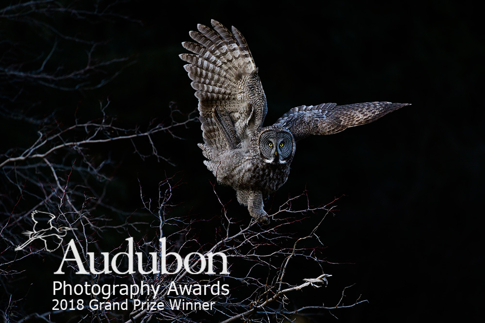 Audubon2018Logo.jpg