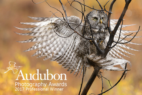 Audubon2017Logo.jpg