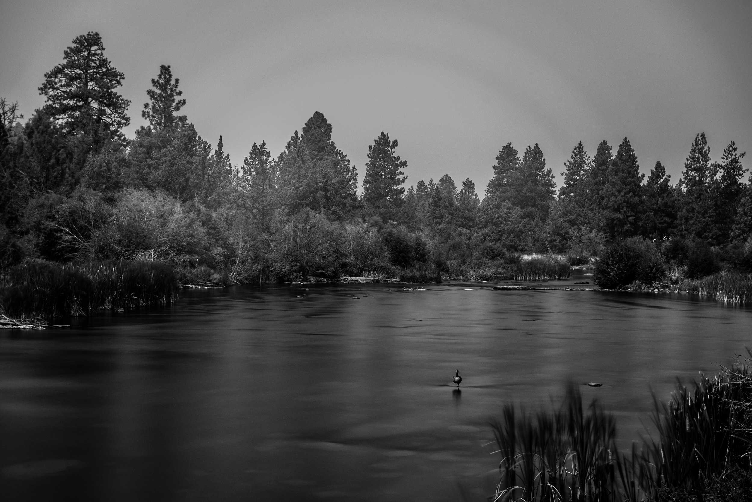 Goose on the Deschutes, Bend, OR (ISO 100, f/8, 176.0s)