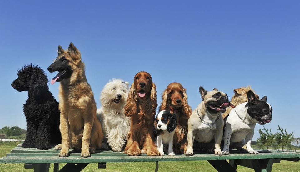 Dog Training Classes   A social way to train your dog   Book Now
