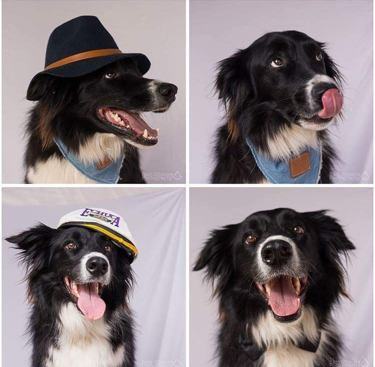 Pet's for Film & T.V   Trained animals ready to become stars!   Take a look