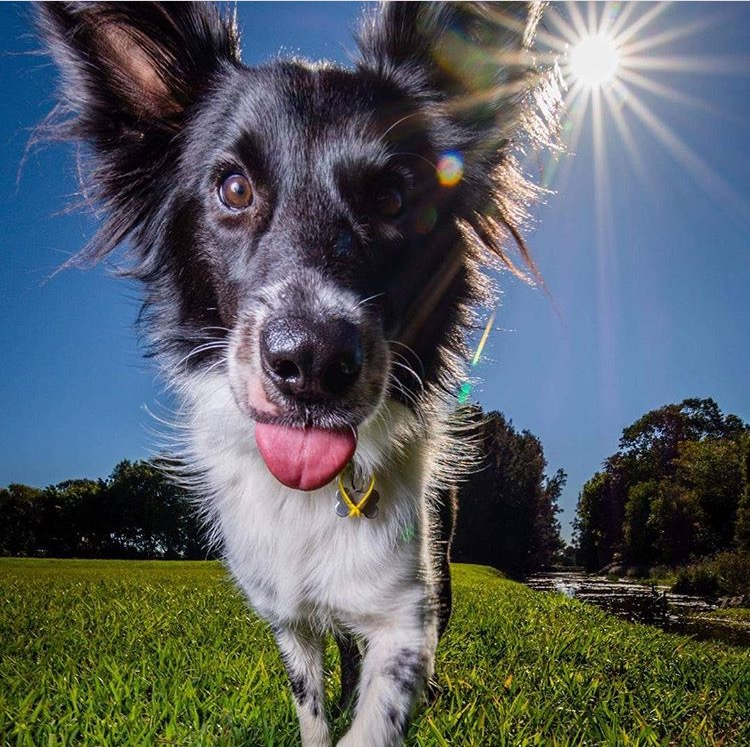 Pet Photography   Capture your pets pic for life   Take a look