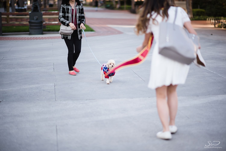 Trojan poodle at USC | Los Angeles Orange County Senior Portrait & Wedding Photographer