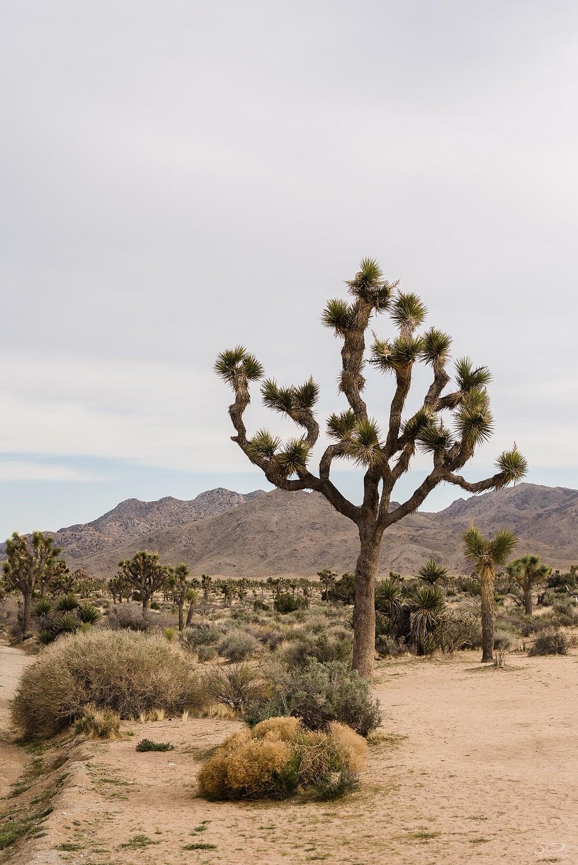 Landscape | Joshua Tree Desert Wedding & Engagement Inspiration