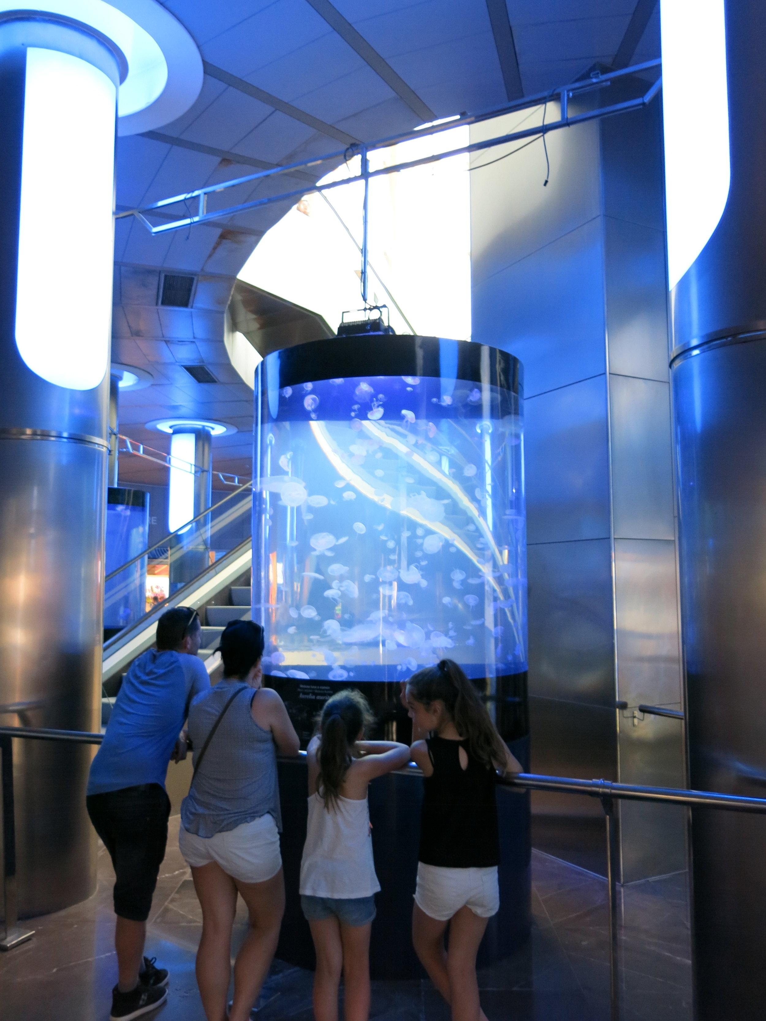 Jellyfish cylinder aquarium
