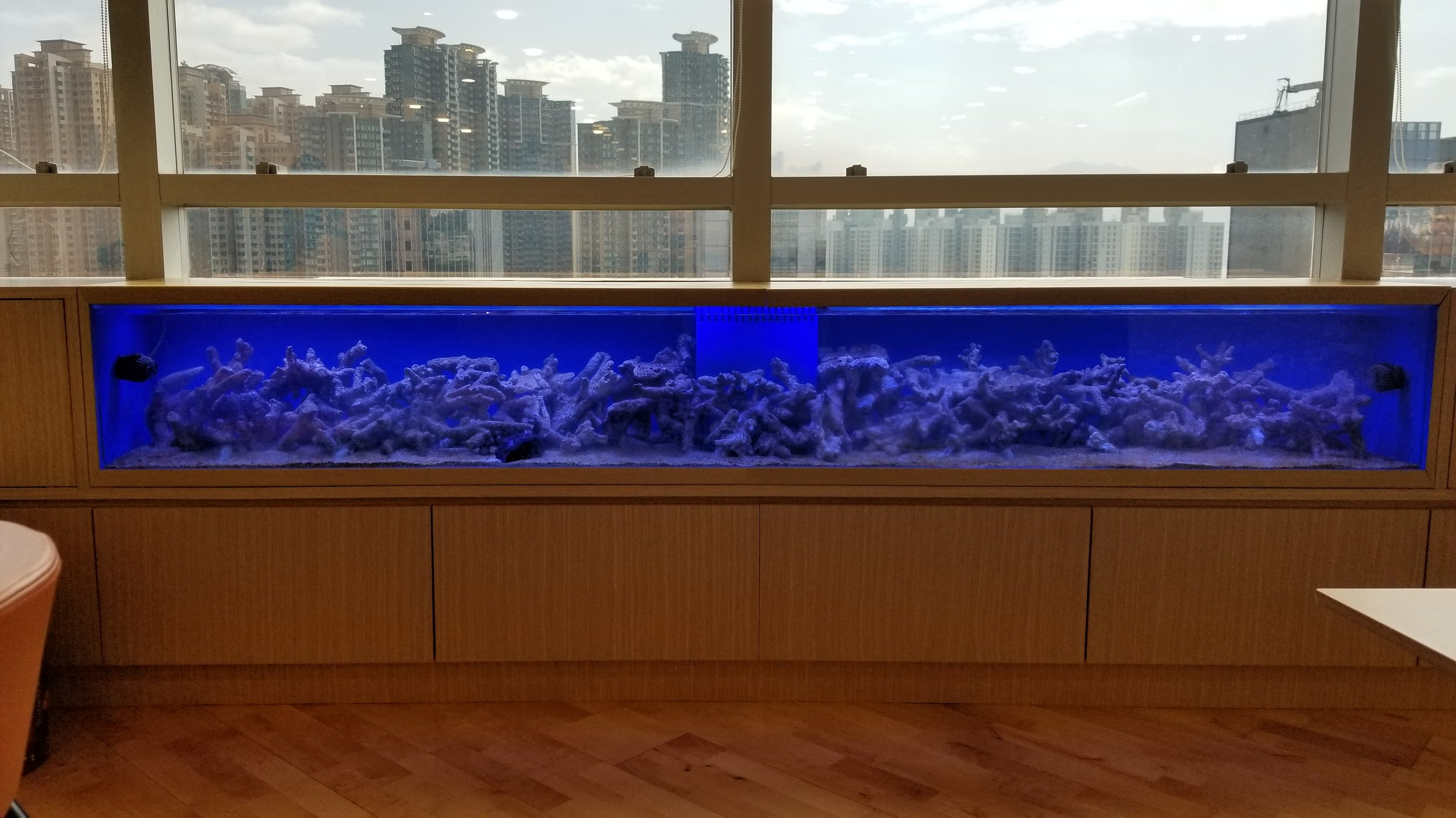 Reef tank before