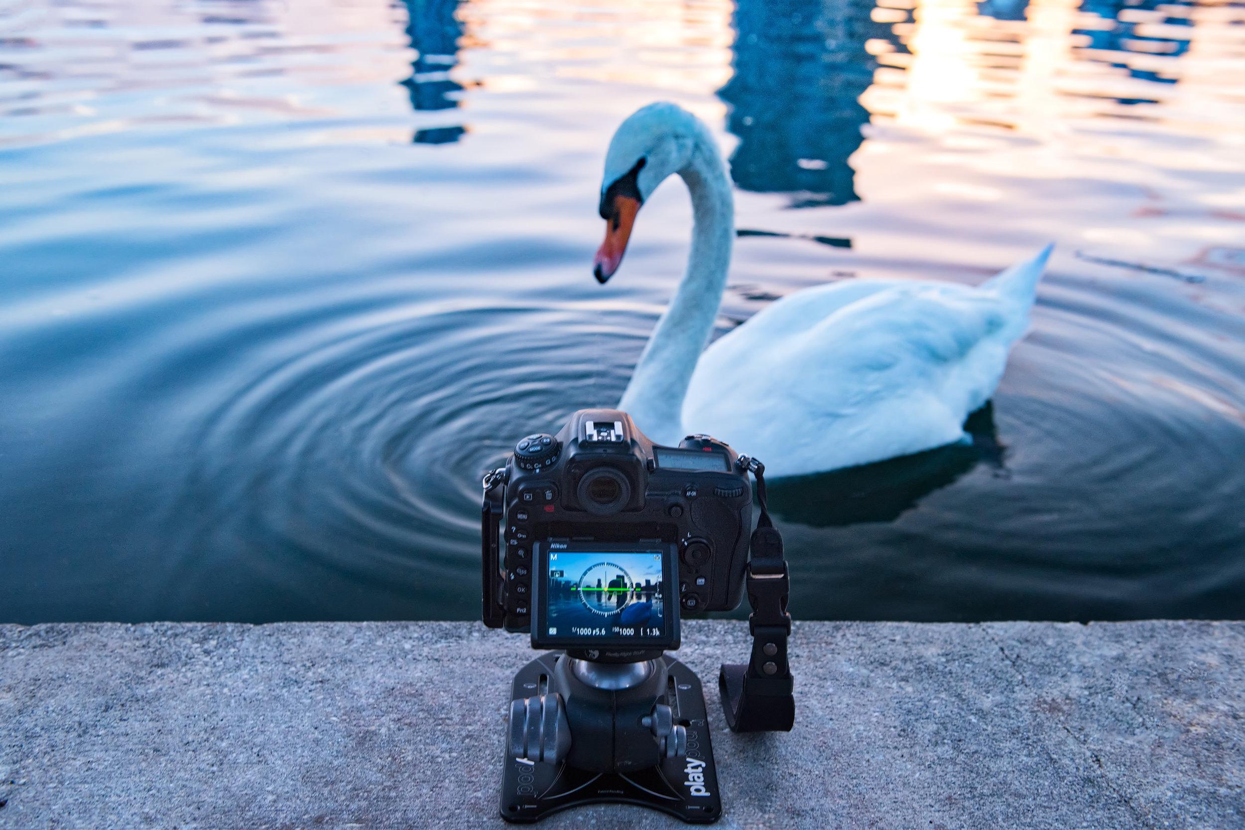 behindthescenesphotographyswan