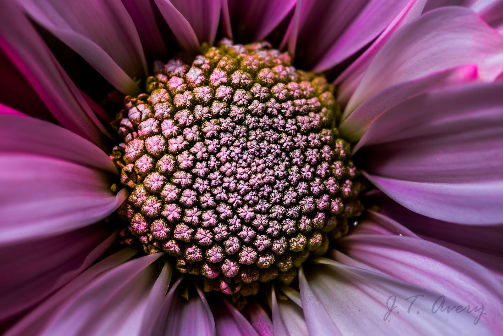 Macro Photography by Justin Avery