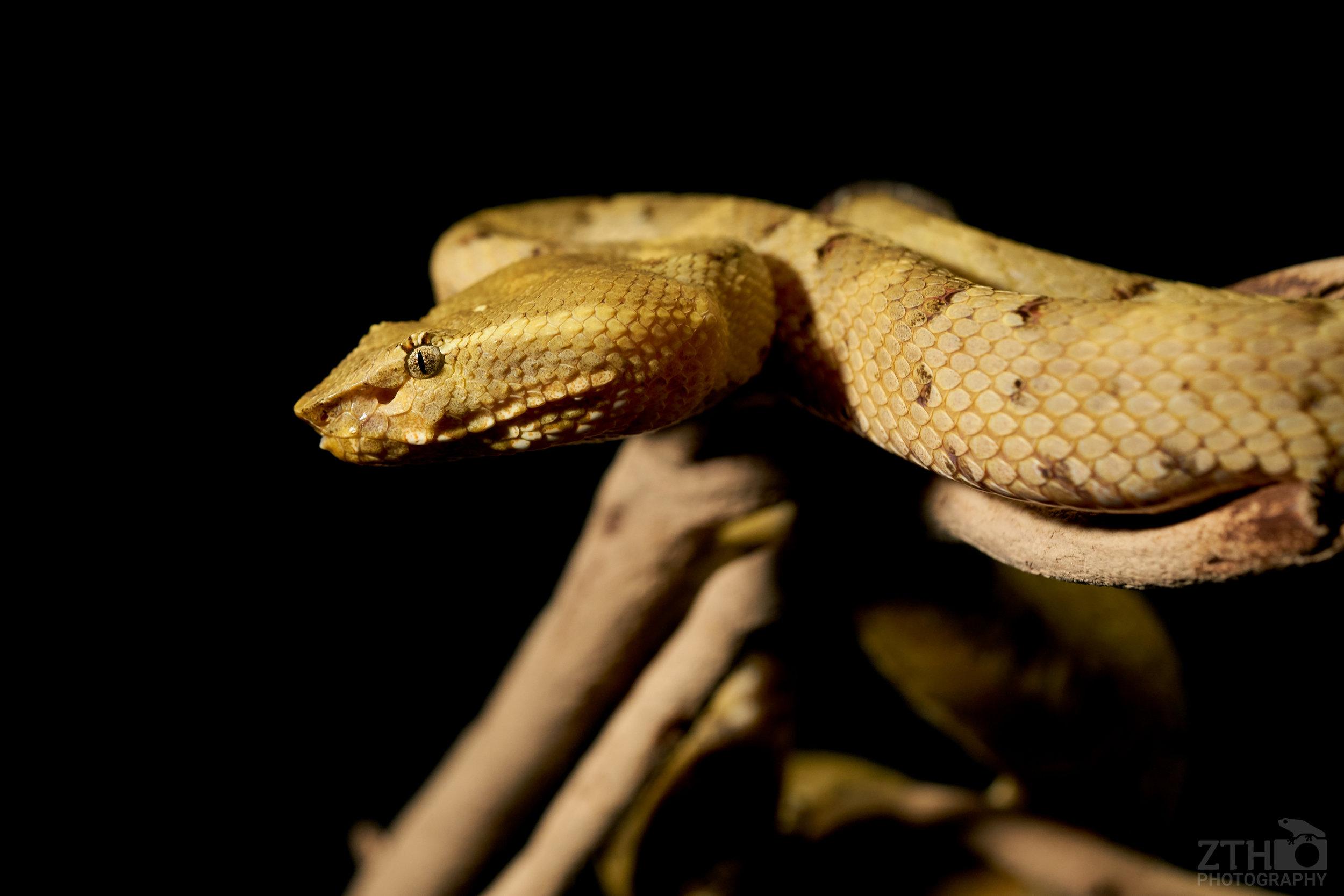Green snake macro photography