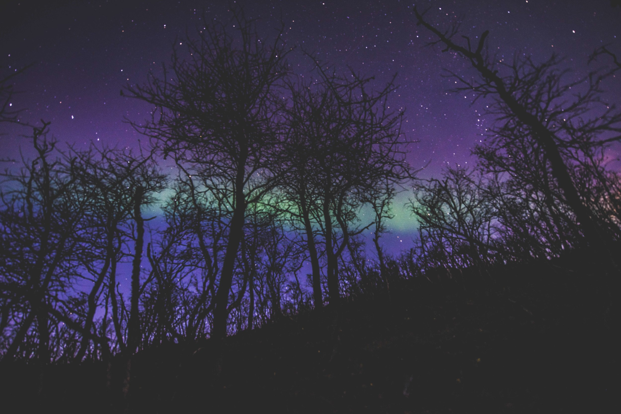 Trees in foreground northern lights long exposure