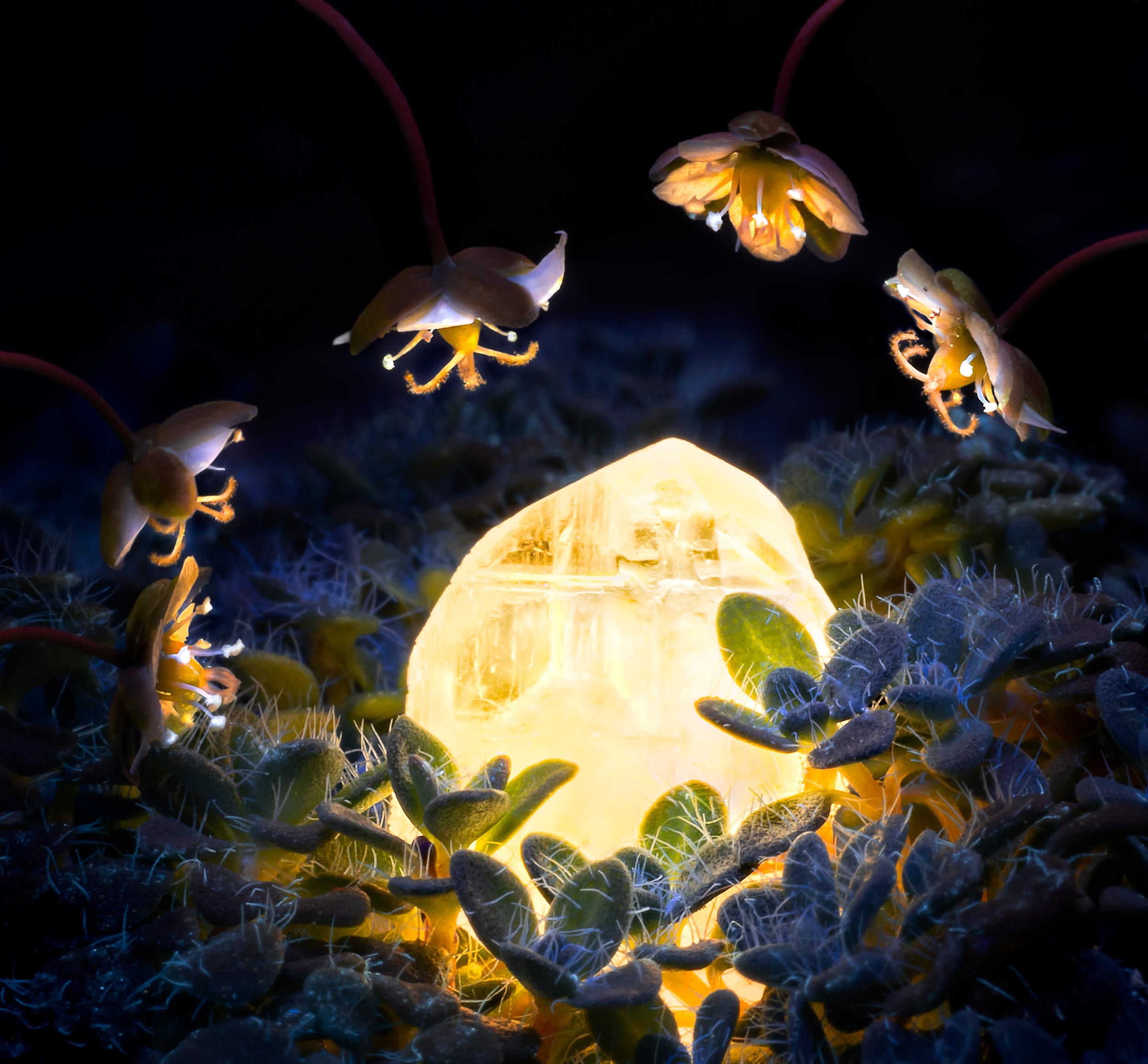 flower macro photography artificial light.jpg