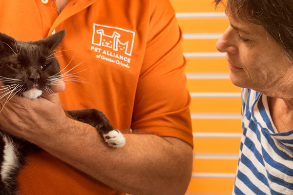 Pet Alliance of Greater Orlando Volunteer holds cat