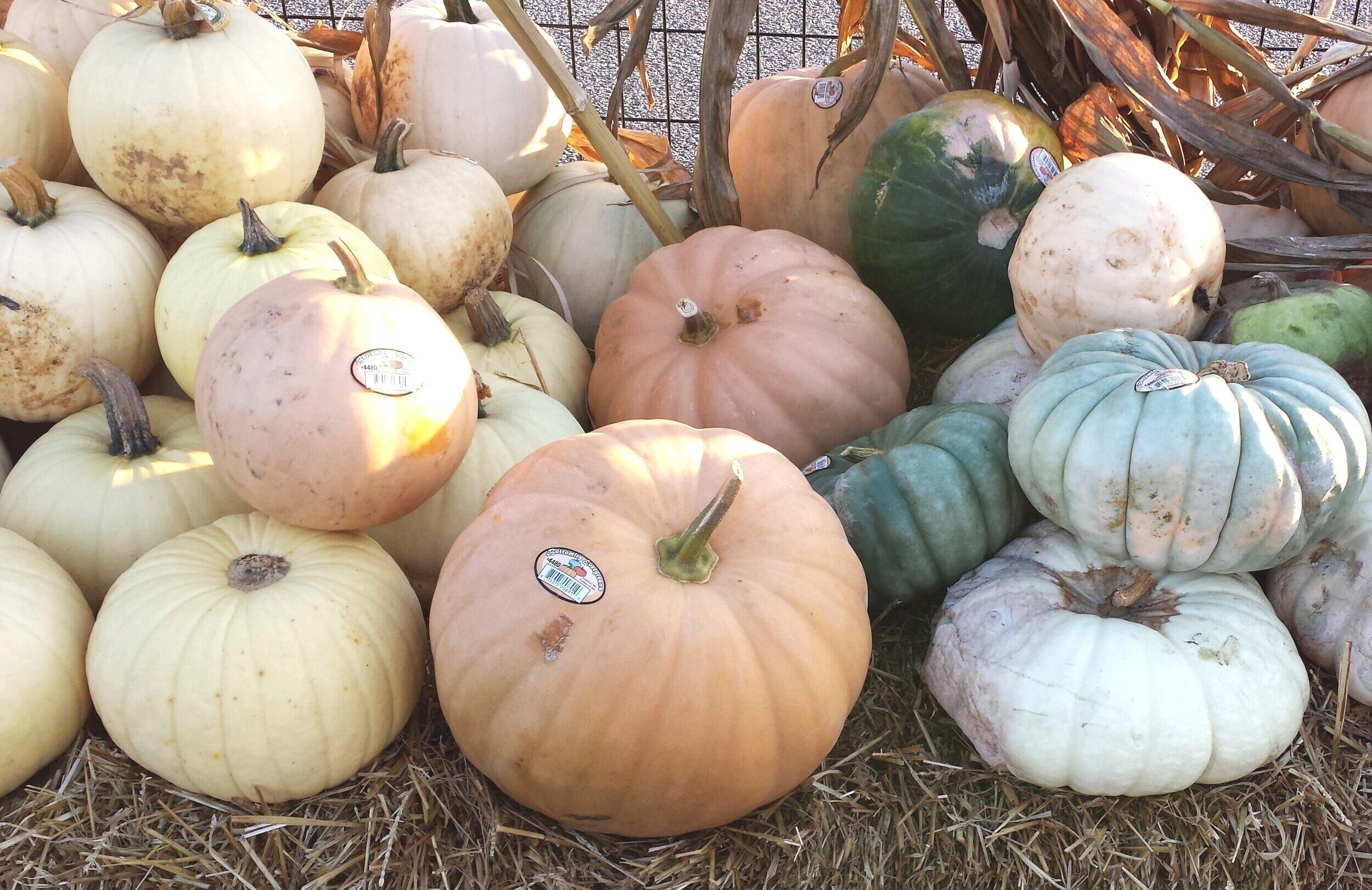 White_Pumpkins_and_Squashes.jpg