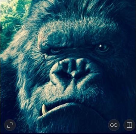 Listen to King Kong by TopShelf.