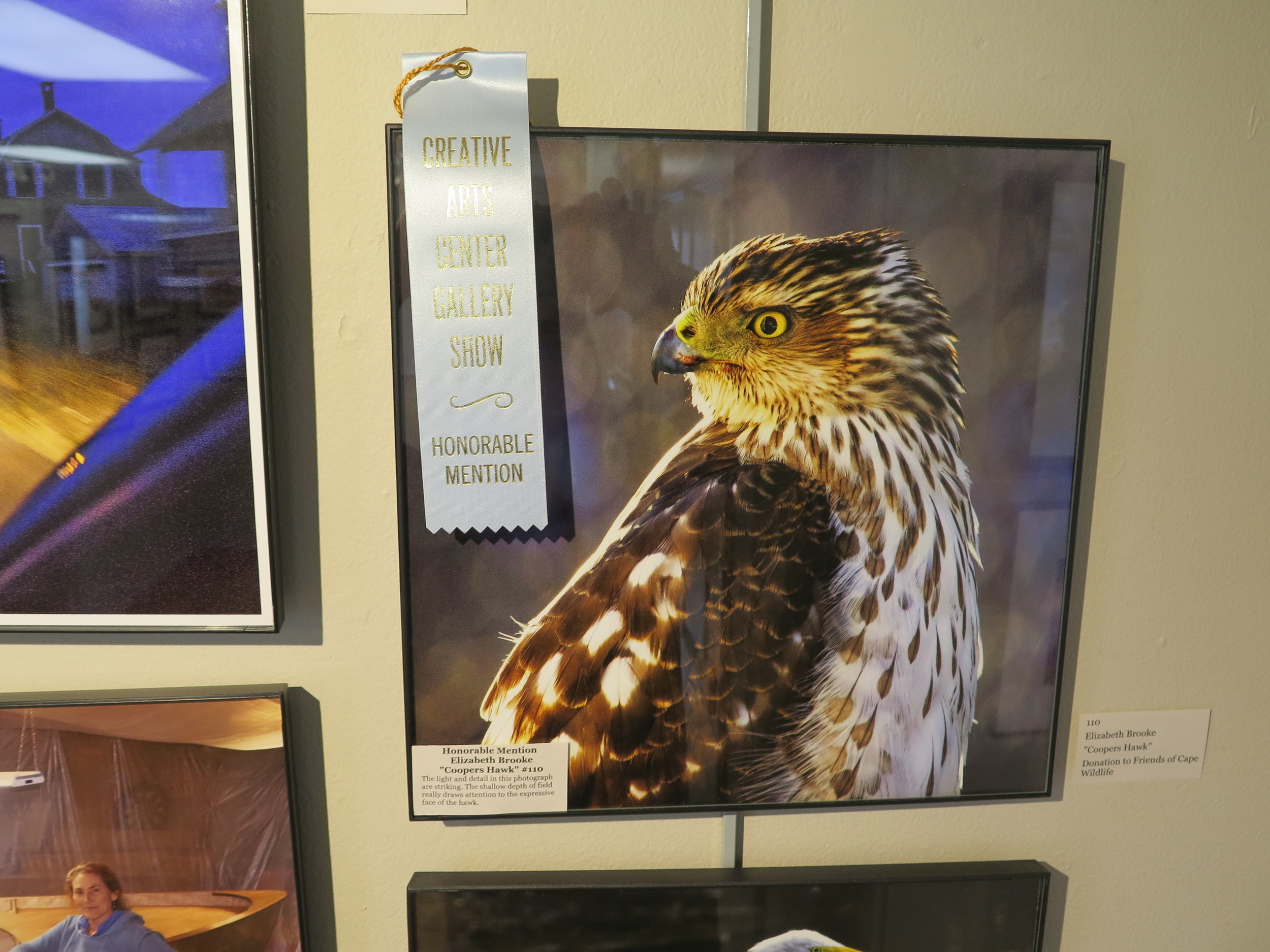"Honorable Mention Elizabeth Brooke ""Coopers Hawk"""