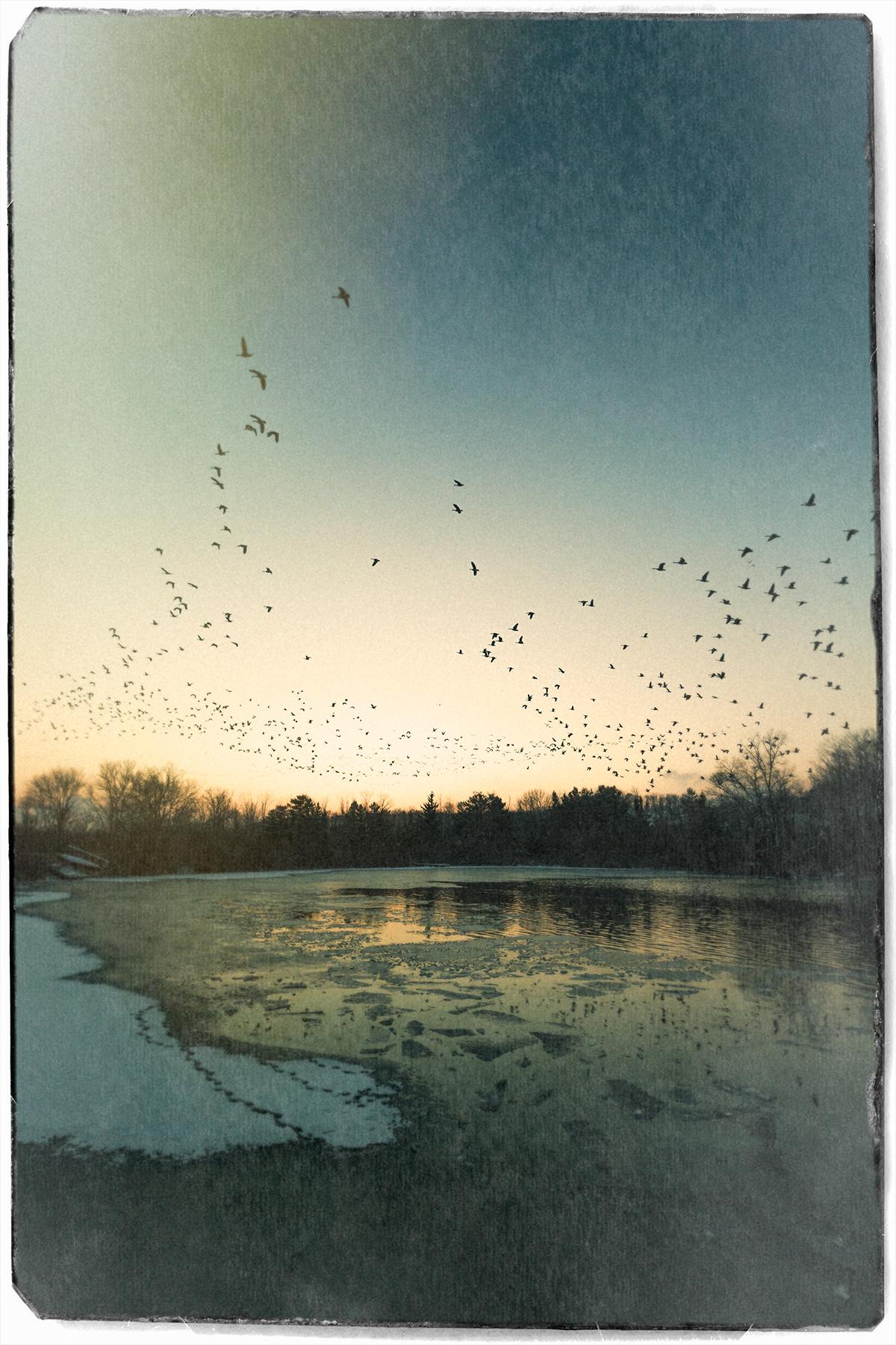 Pond-&-Geese-4.jpg