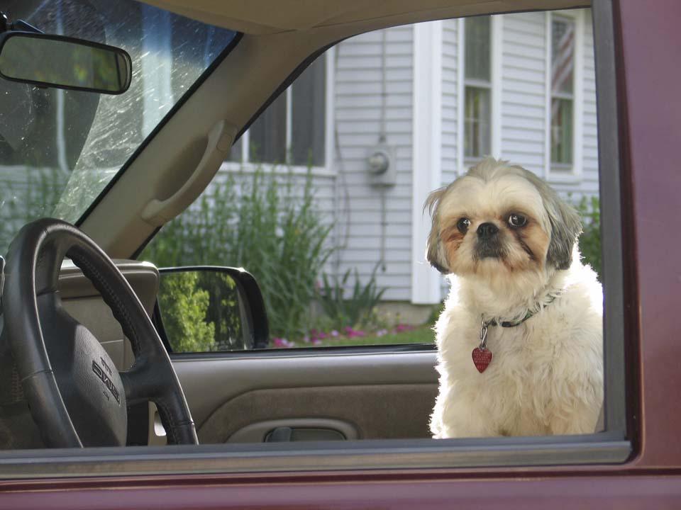 Canine Driver.jpg
